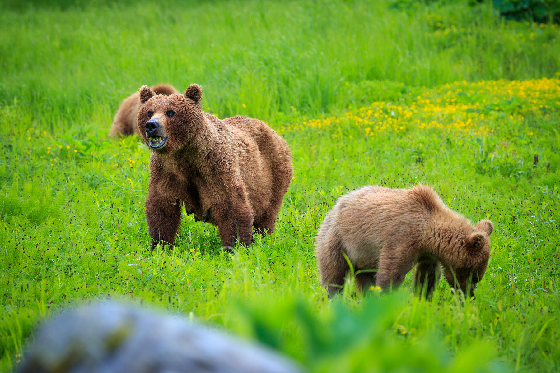 Misty Fjords bear viewing tours